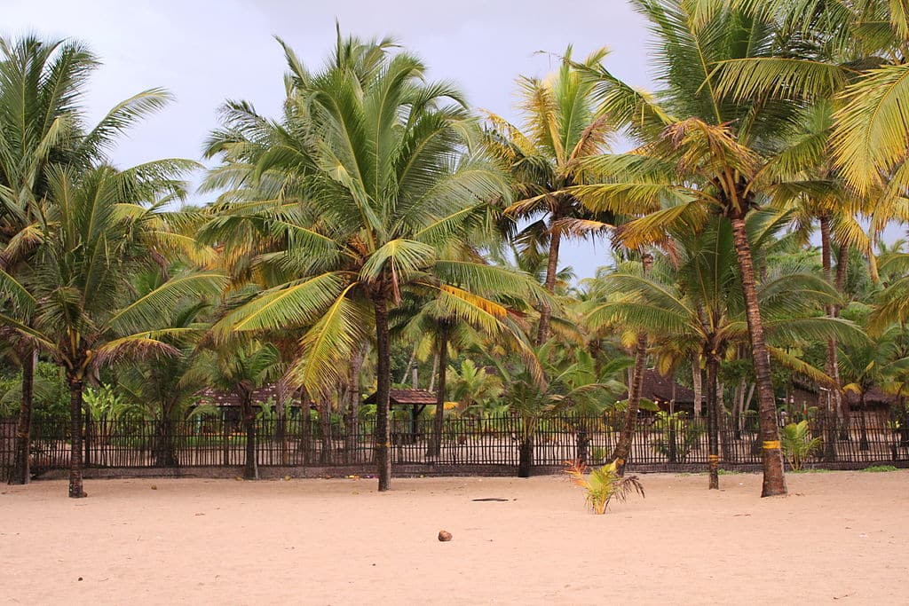 best-time-to-visit-marari-beach Best Time to Visit Marari Beach