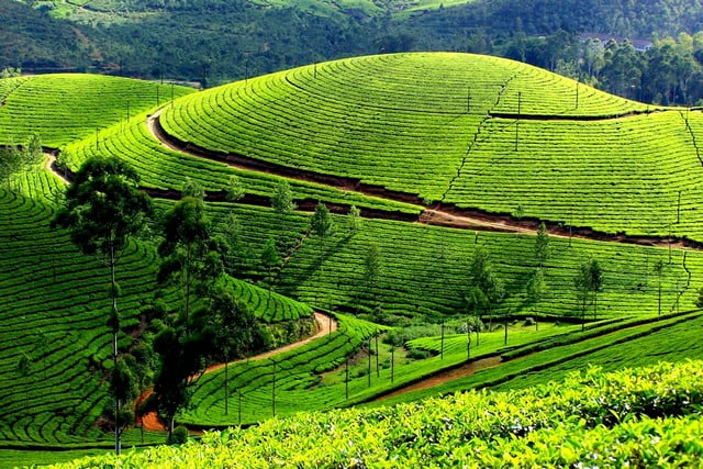 top-17-best-tourist-places-to-visit-in-kerala-with-photos Top 17 Best Tourist Places to Visit in Kerala (with Photos)