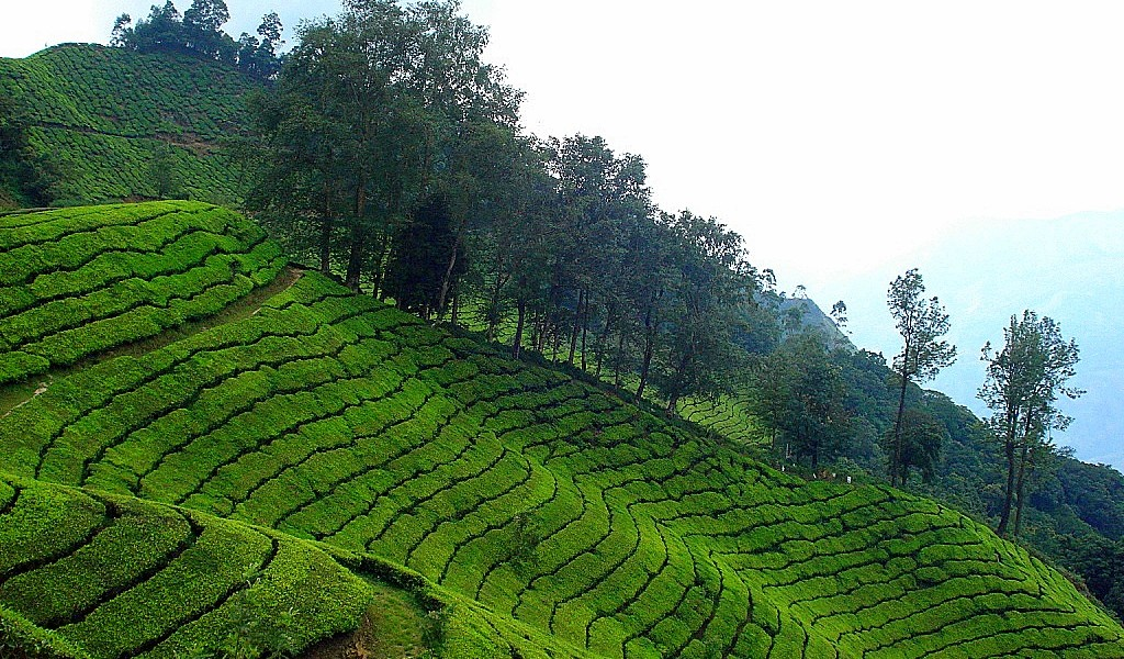 best-time-to-visit-munnar-2 Best time to visit Munnar