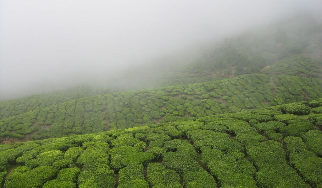 best-time-to-visit-munnar Best time to visit Munnar