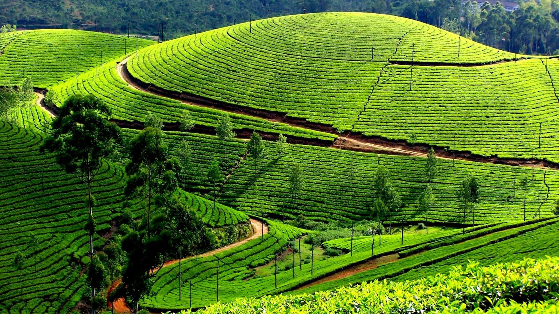 munnar-travel-guide Munnar Travel Guide