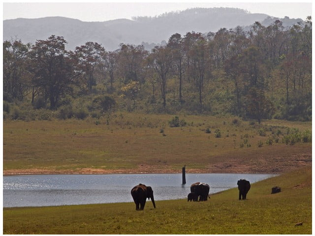 best-things-to-do-in-thekkady Best Things to do in Thekkady