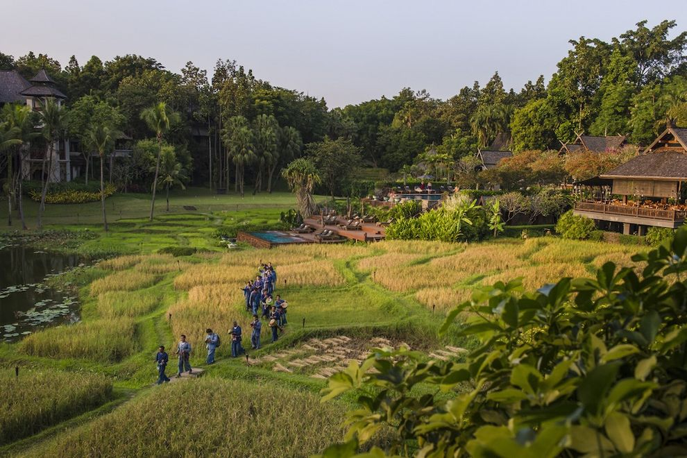 finding-luxury-in-the-rice-fields-of-thailand-usa-today-10best-10 Finding luxury in the rice fields of Thailand - USA Today 10Best