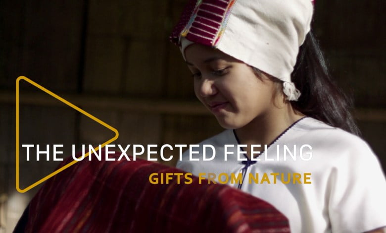 the-unexpected-feeling-episode-2-gift-from-nature The Unexpected Feeling Episode 2: Gift from Nature