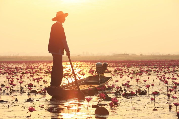 TAT invites all to Udon Thani's 'Pink Water Lilies Lake' experience