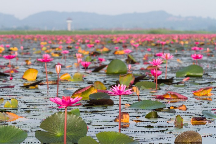 nakhon-si-thammarat-and-phatthalung-expanding-southern-thailands-tourism-choice-12 Nakhon Si Thammarat and Phatthalung expanding Southern Thailand's tourism choice
